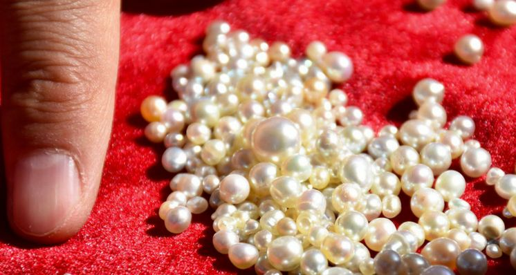 Resurrecting an Industry: Reviving Pearls in the United Arab Emirates