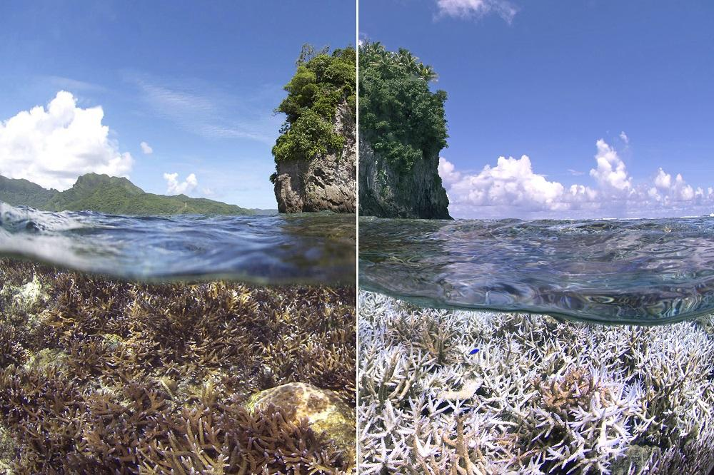 Precious Coral and Common Coral Gem A Blog The Impact of Coral Bleaching
