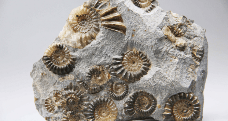 Understanding Fossils as Decorative Materials