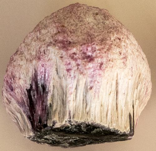 Mushroom tourmaline specimen. Image courtesy of E. Passmore. Myanmar blog post